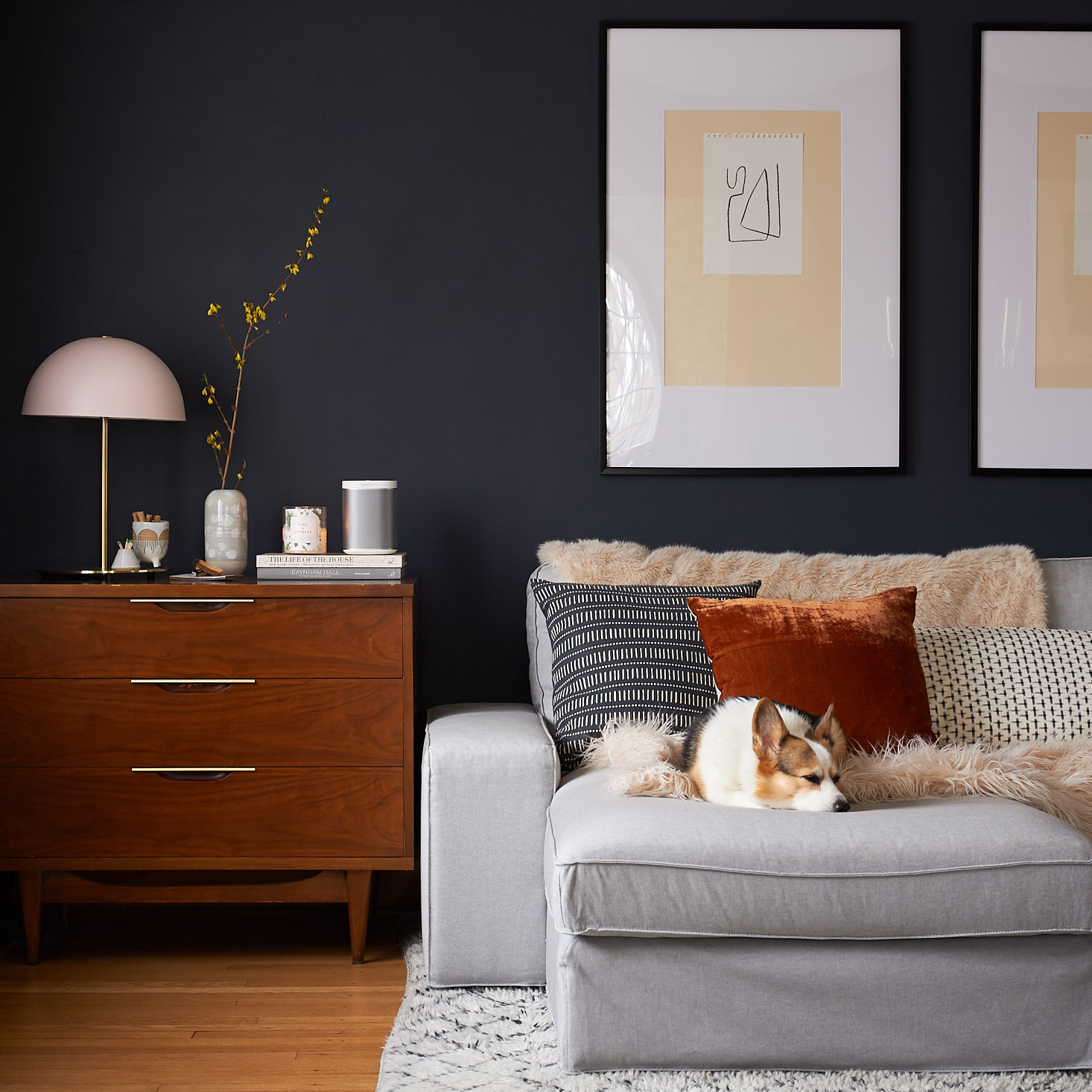 corgi on couch mid century dresser living room