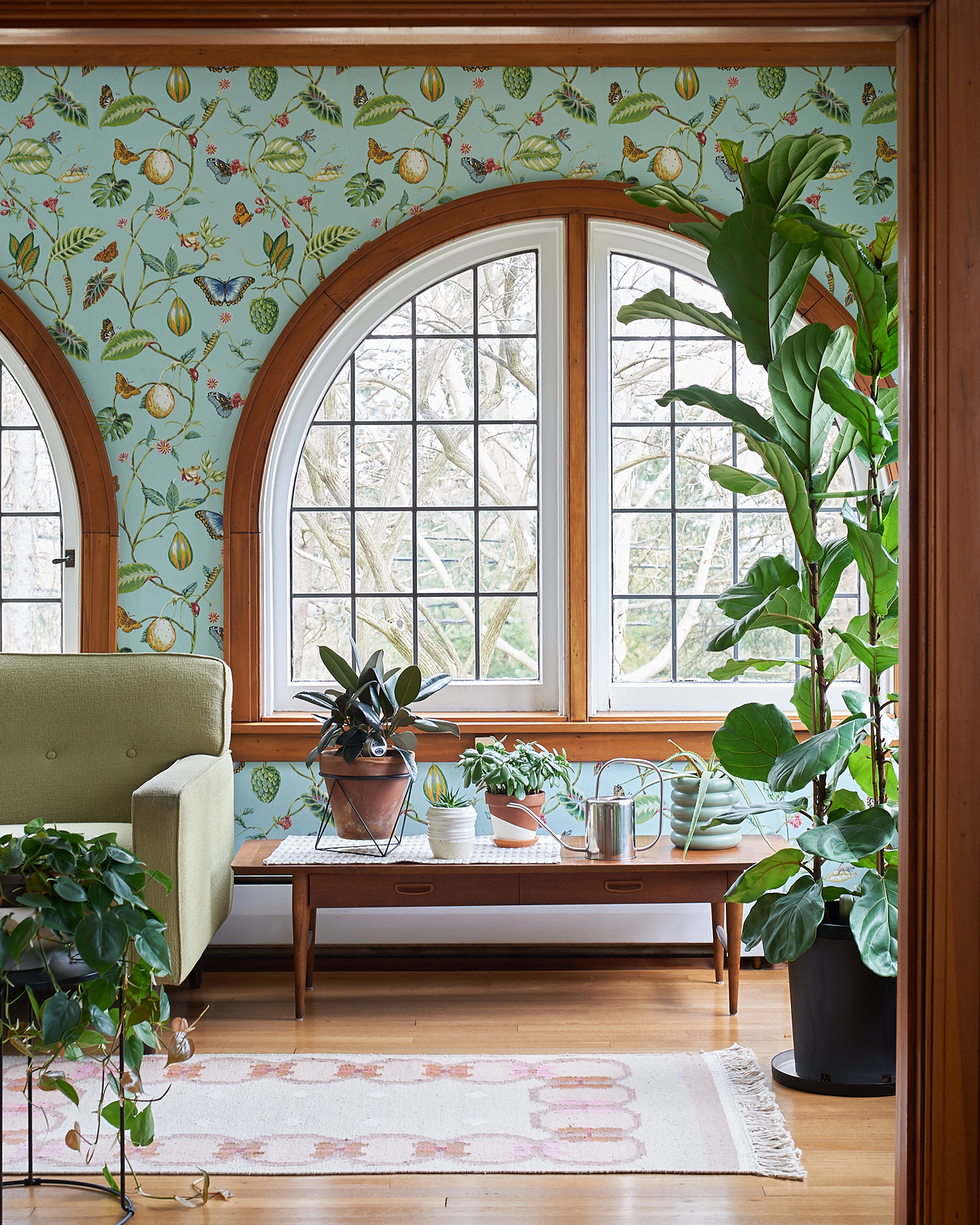 Sunroom with arched windows fiddle leaf fig